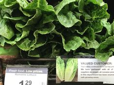 Illnesses mount in romaine lettuce E. coli outbreak
