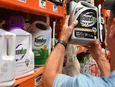 Monsanto Ordered to Pay $289 Million in Roundup Cancer Trial