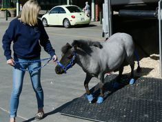 Miniature Horses Are Welcome on Alaska Airlines (But No Snakes, Please)