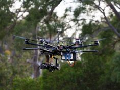 Koala-sensing drone helps keep tabs on drop bear numbers