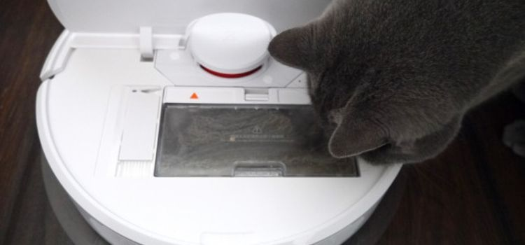 Cat vs best and worst robot vacuum cleaners